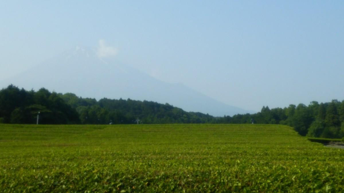 お茶畑撮影行ってきました!